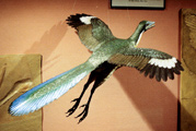 Archaeopteryx wood carving